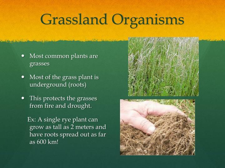 Grassland Organisms