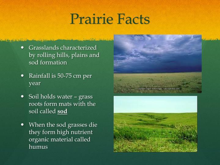 Prairie Facts