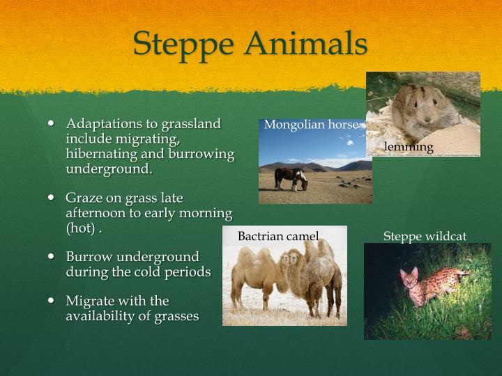Steppe Animals
