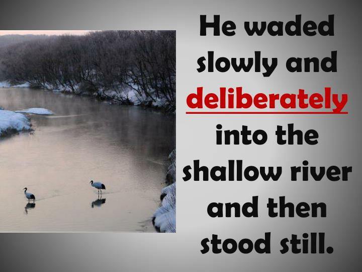 He waded slowly and deliberately into the shallow river and then stood still
