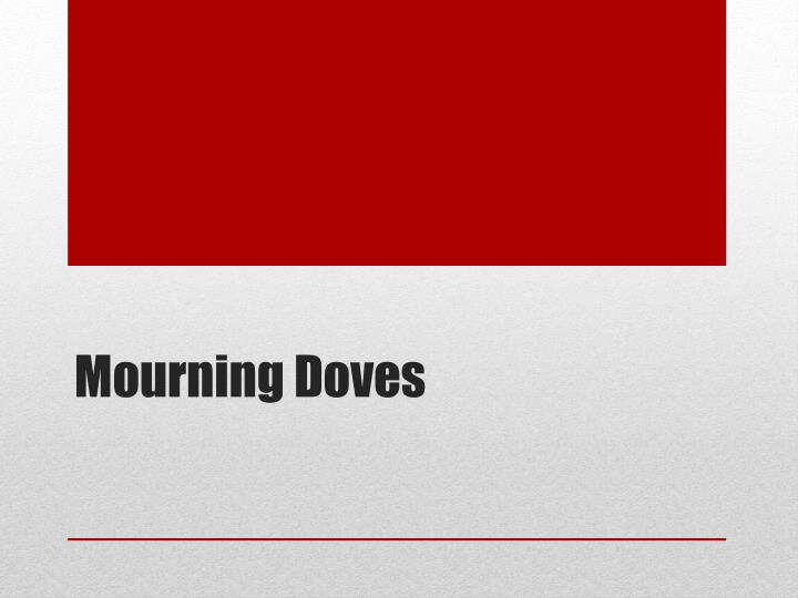mourning doves n.