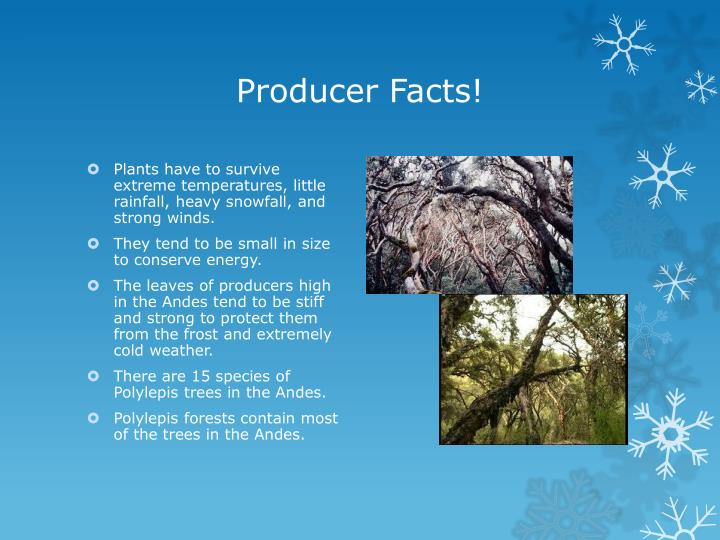Producer Facts!