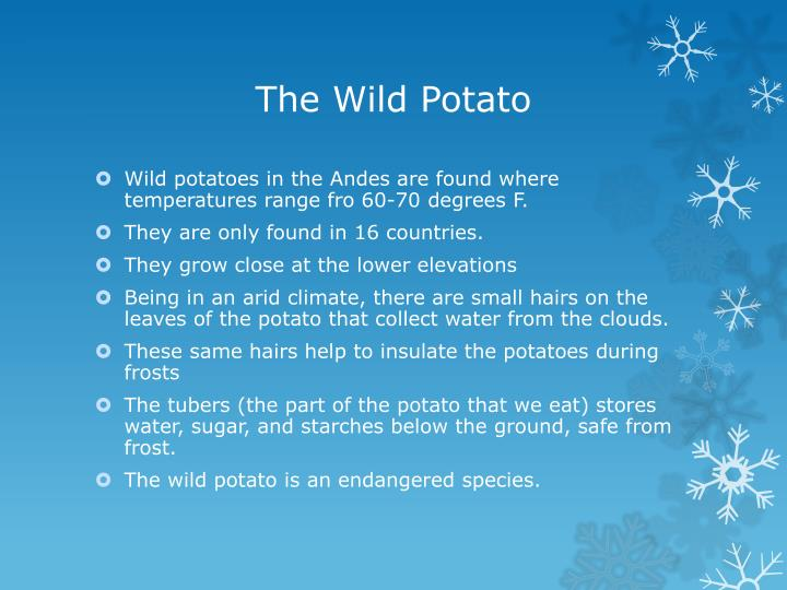 The Wild Potato
