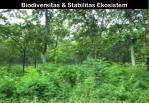 biodiversitas stabilitas ekosistem
