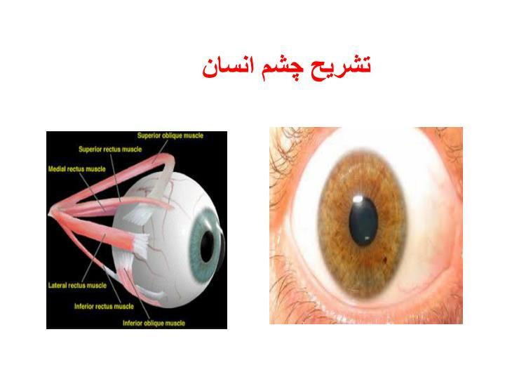 تشریح چشم انسان