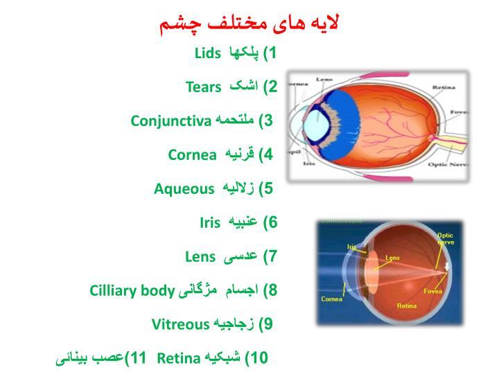 لایه های مختلف چشم