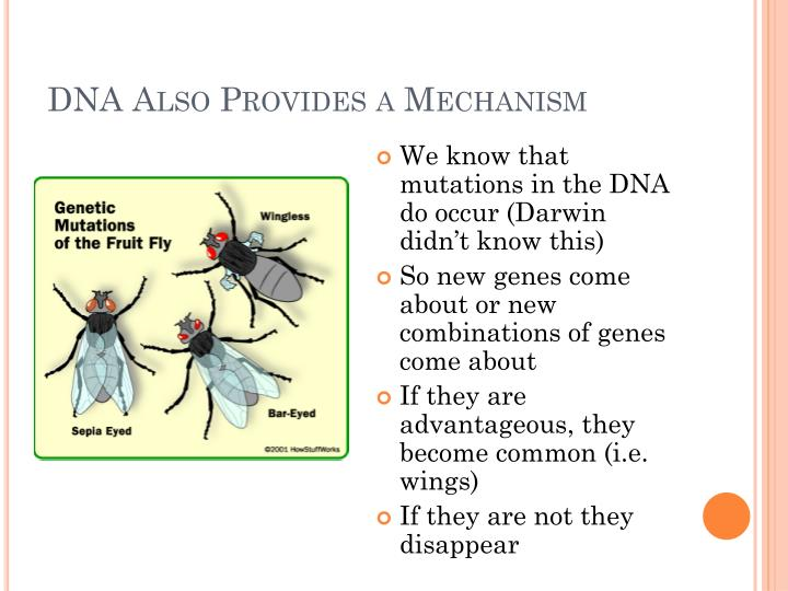 DNA Also Provides a Mechanism