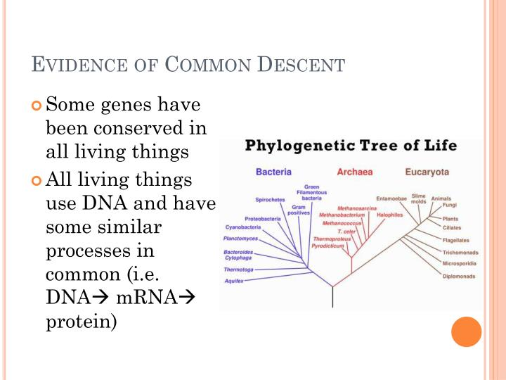 Evidence of Common Descent