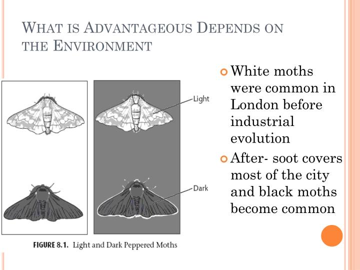 What is Advantageous Depends on the Environment