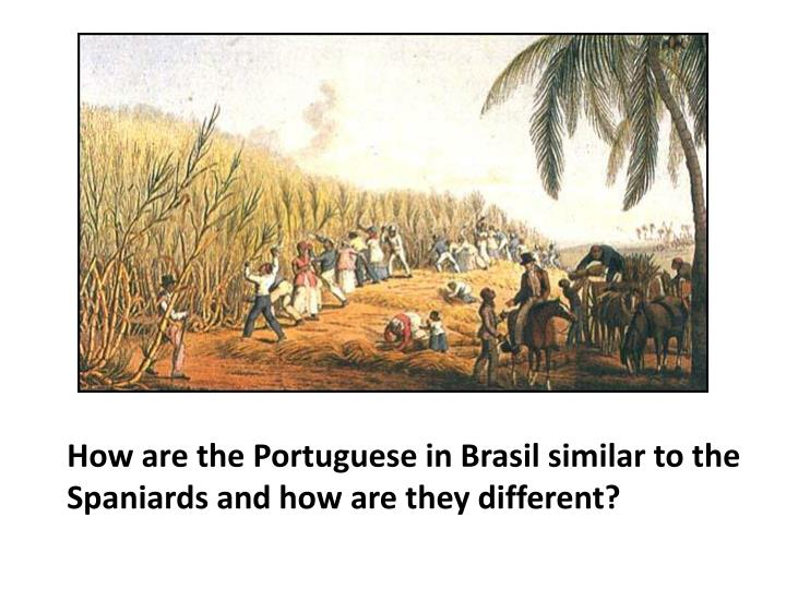 How are the Portuguese in