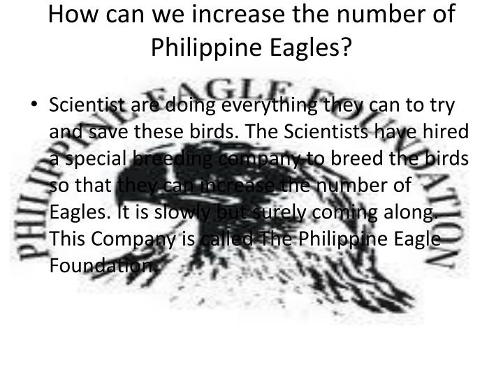 How can we increase the number of Philippine Eagles?