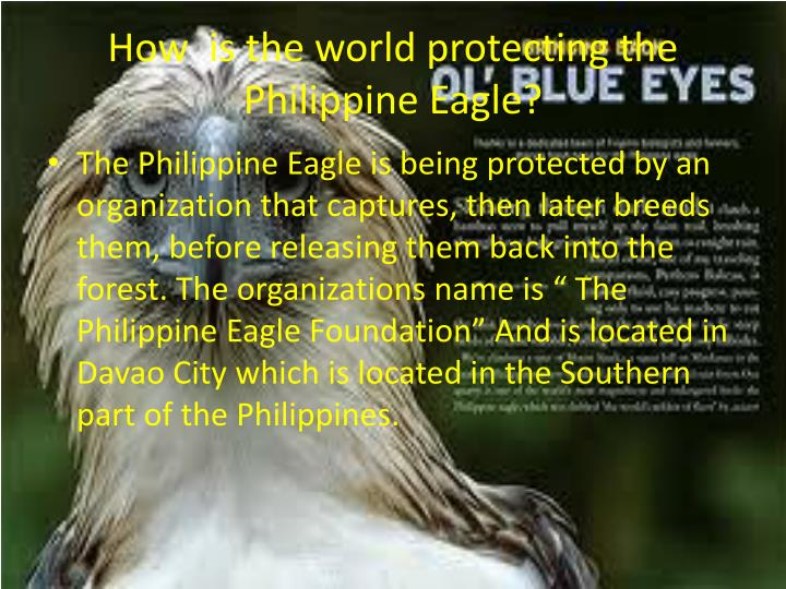 How  is the world protecting the Philippine Eagle?