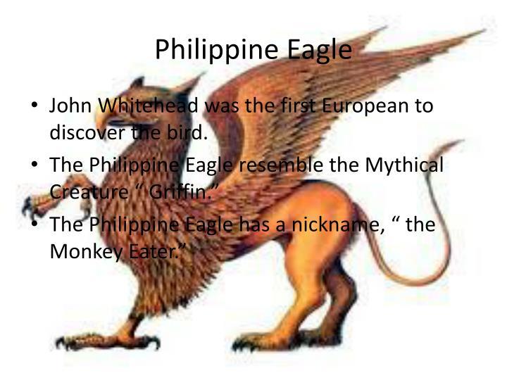 Philippine eagle1