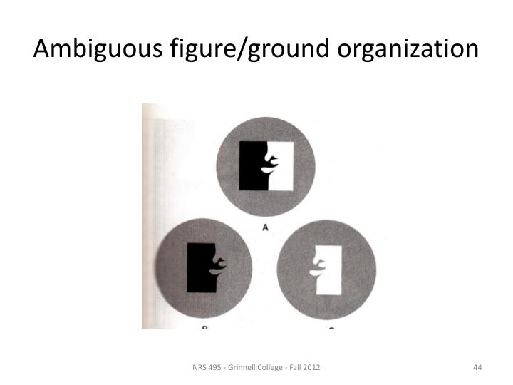Ambiguous figure/ground organization