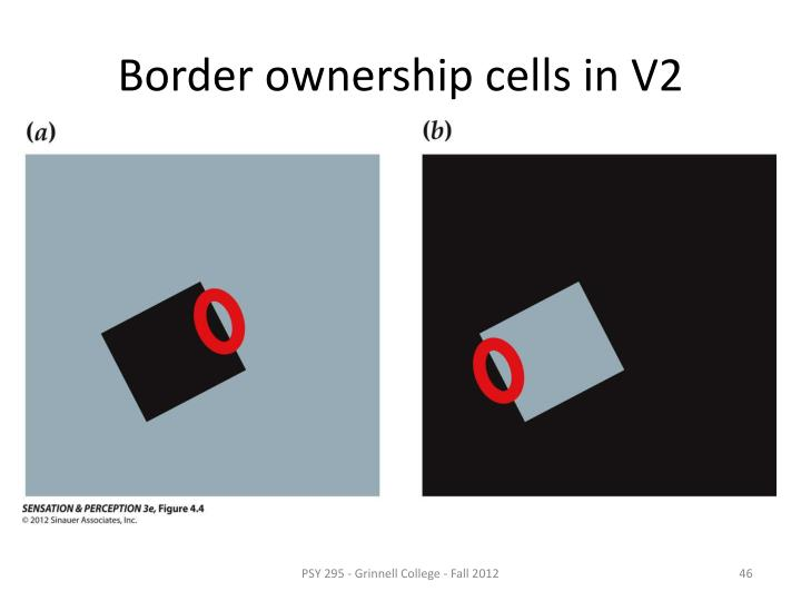 Border ownership cells in V2