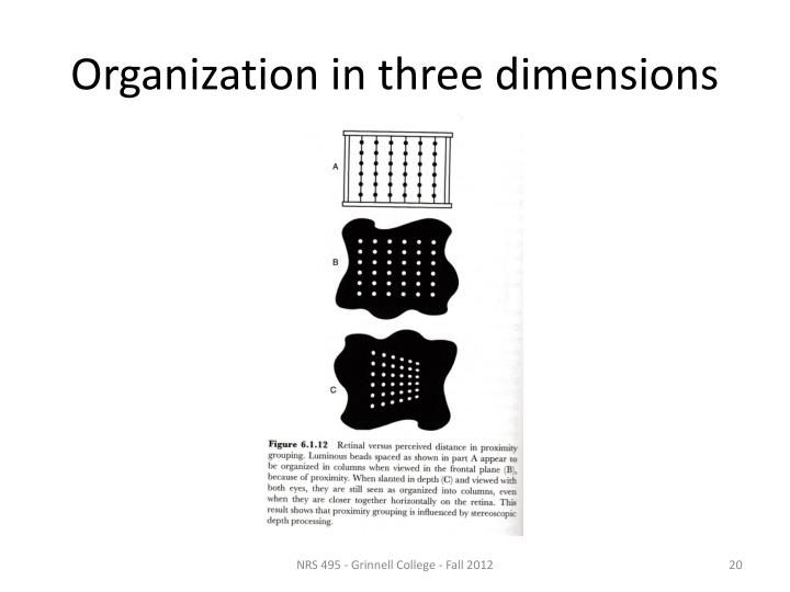 Organization in three dimensions