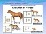 evolution of horses anatomy continued