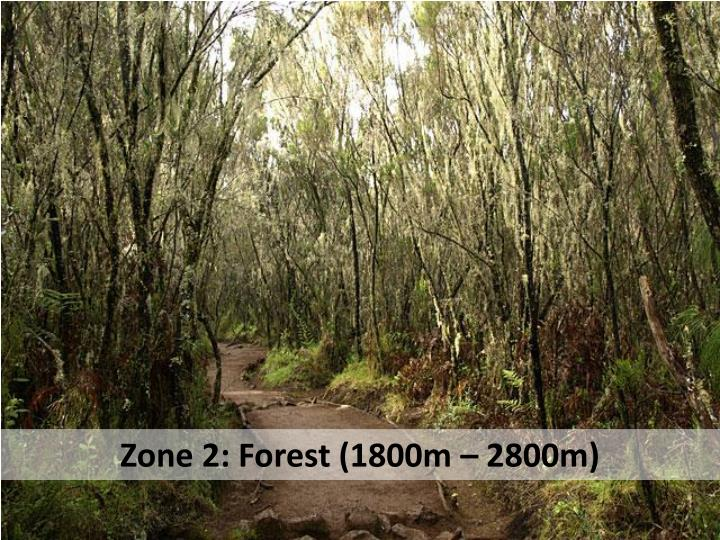Zone 2: Forest (1800m – 2800m)