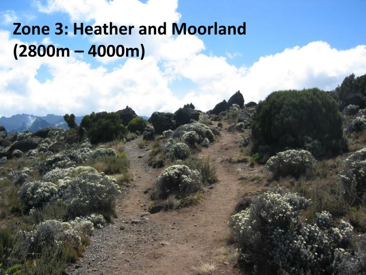 Zone 3: Heather and Moorland