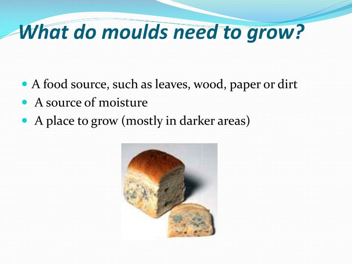 What do moulds need to grow