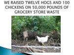 we raised twelve hogs and 100 chickens on 50 000 pounds of grocery store waste