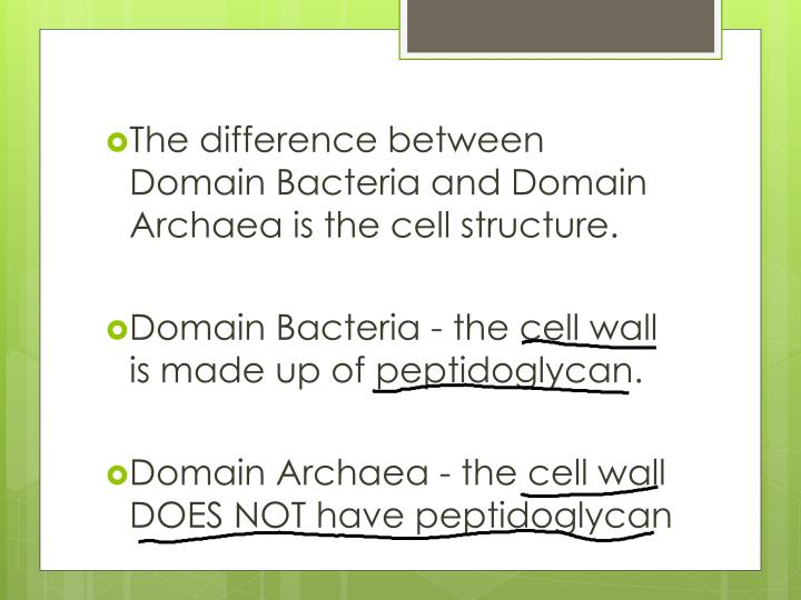 The difference between Domain Bacteria and Domain