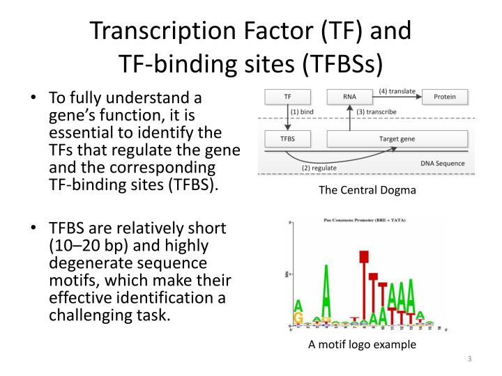 Transcription factor tf and tf binding sites tfbss