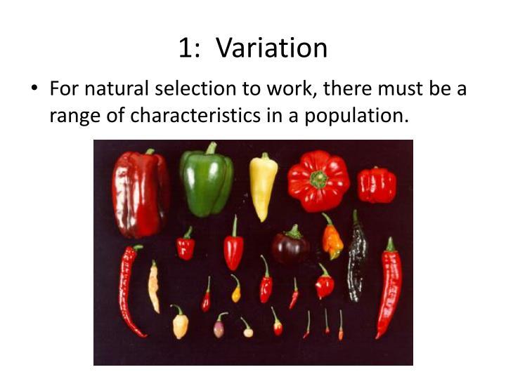 1:  Variation