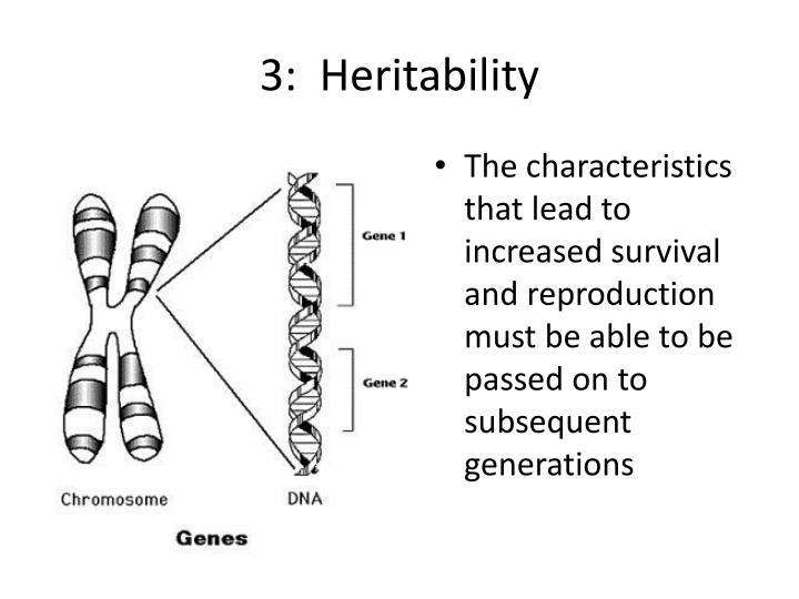 3:  Heritability