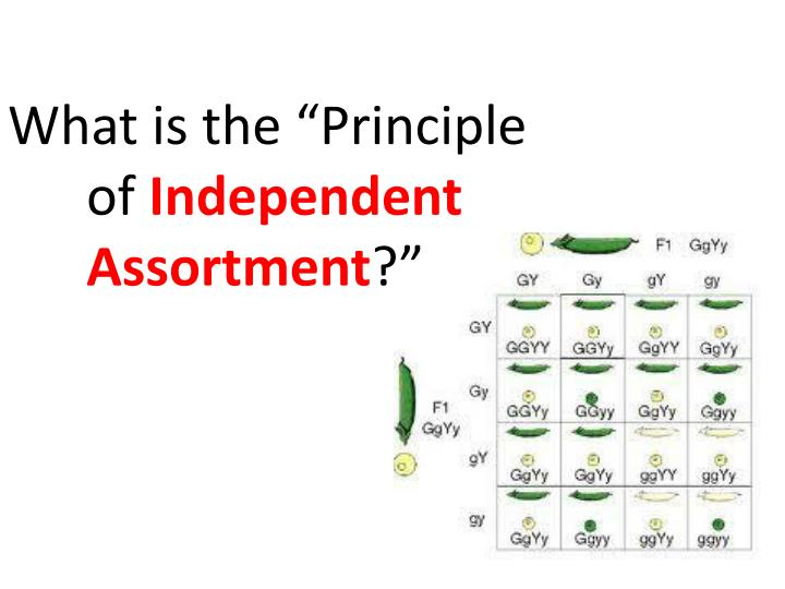 """What is the """"Principle of"""