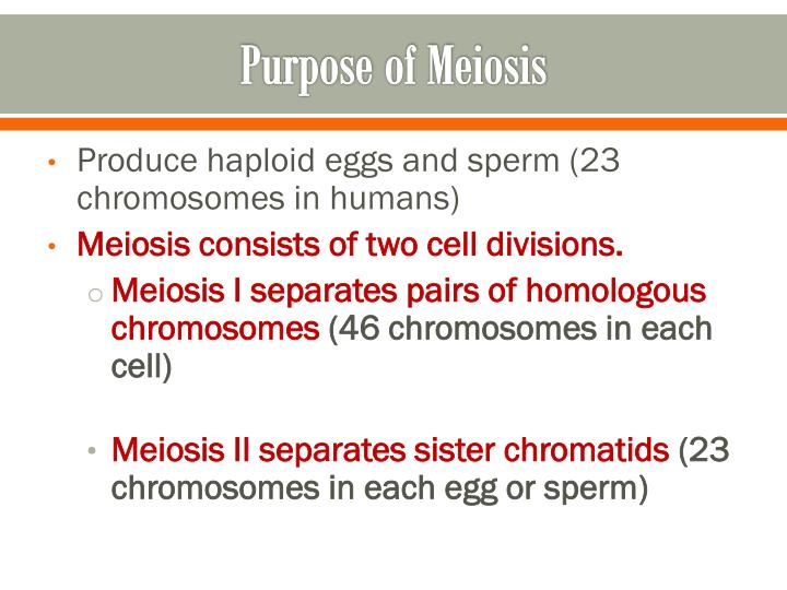 Purpose of Meiosis