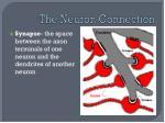 the neuron connection