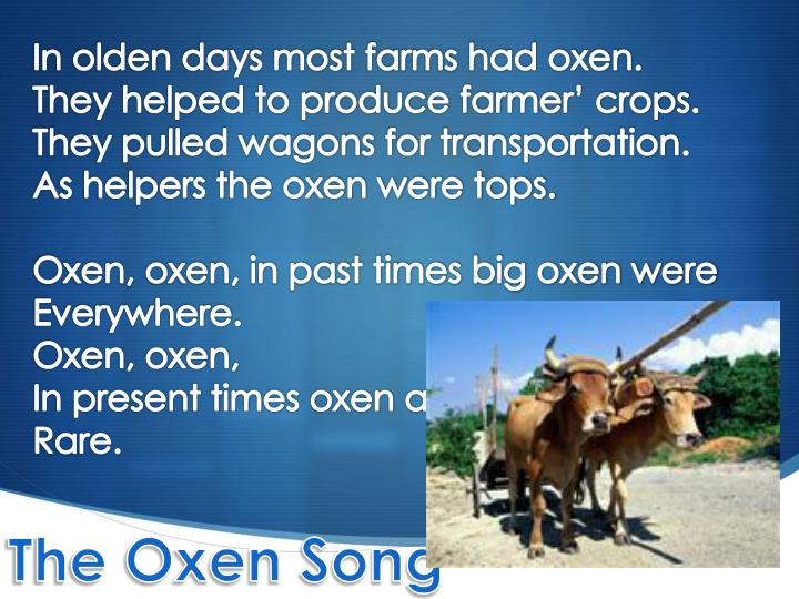 In olden days most farms had oxen.