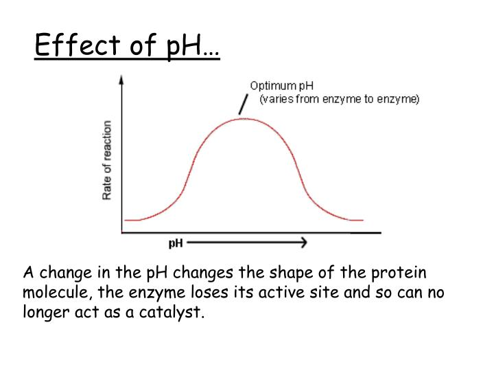 Effect of pH…