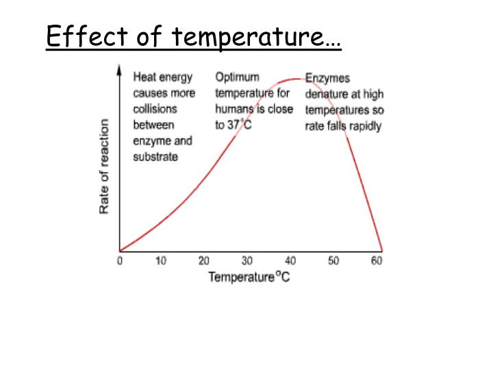 Effect of temperature…