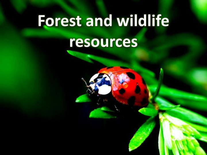 forest and wildlife resources n.