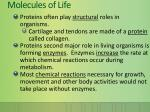 molecules of life10