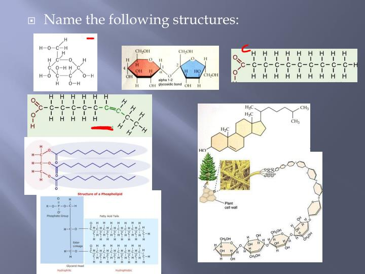 Name the following structures: