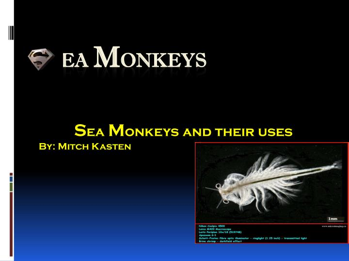 S ea m onkeys and their uses by mitch kasten