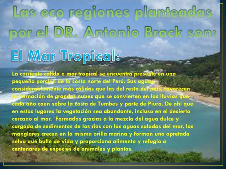 Las eco regiones planteadas por el DR. Antonio Brack son: