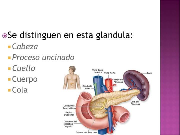 PPT - ANATOMIA PANCREAS PowerPoint Presentation - ID:2673911