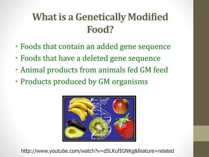 the role of genetically modified foods in todays society Genetically modified organisms also known as gmo's are commonplace items today on the shelves of the local grocery store, or even the racks of the local department store technology today has allowed companies to modify the genetics of everything from corn and soybeans, to cotton and salmon.