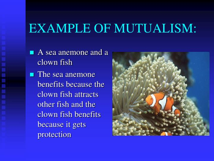 Ppt Symbiotic Relationships Words 17 22 Symbiosis Mutualism