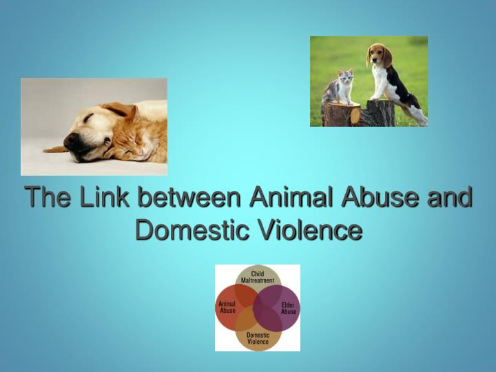 the link between animal abuse and domestic violence n.