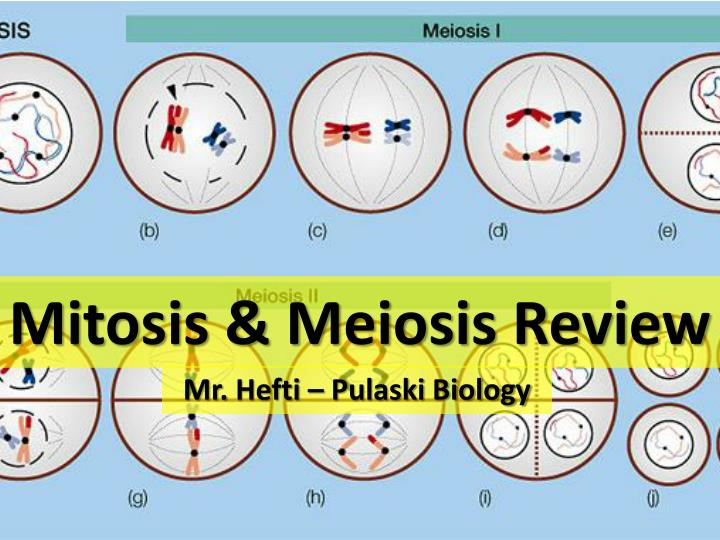 Ppt mitosis amp meiosis review powerpoint presentation id2677164 mitosis meiosis review ccuart Gallery