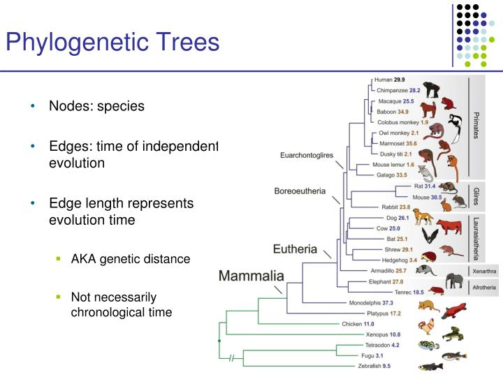 reconstructing plant phylogeny based on morphological Morphological methods use the phenotype as the base of phylogeny  the  relationships between species can be represented by a phylogenetic tree   biologists to reconstruct the evolutionary history of all organisms on.