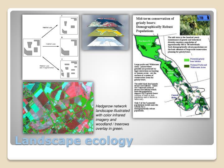 Hedgerow network landscape illustrated