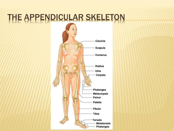 introduction to the skeleton This introduction to the human skeleton science lesson plan lesson plan is suitable for 3rd - 5th grade students identify and explain the purpose of some bones in.