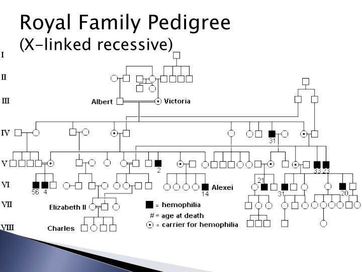 Royal Family Pedigree