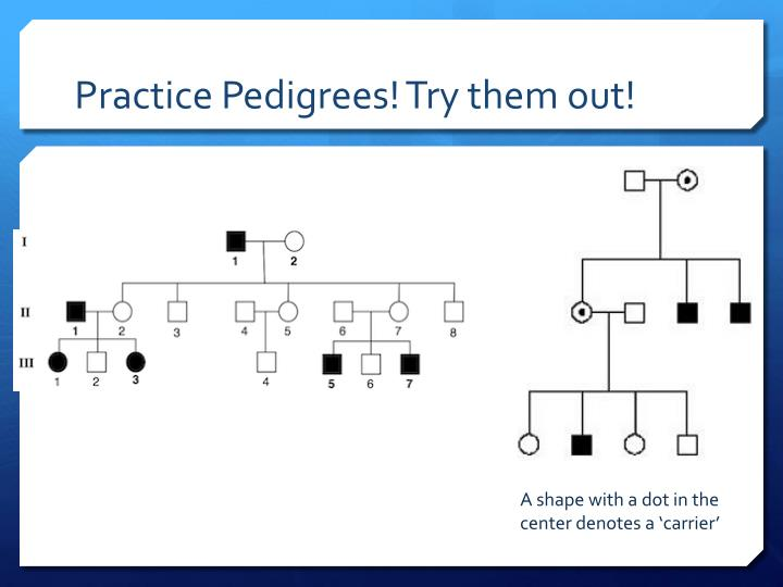 practice pedigrees try them out n.